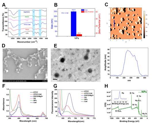川大王云兵教授团队Biomacromolecules报道:协同化学和光动力抗菌治疗的多功能纳米颗粒用于增强伤口愈合