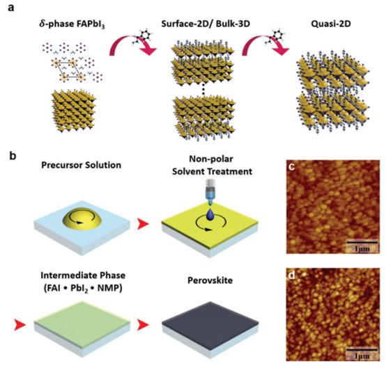 杨阳Adv. Mater.: 表面2D/本体3D异相钙钛矿纳米颗粒,用于长期稳定的发光二极管